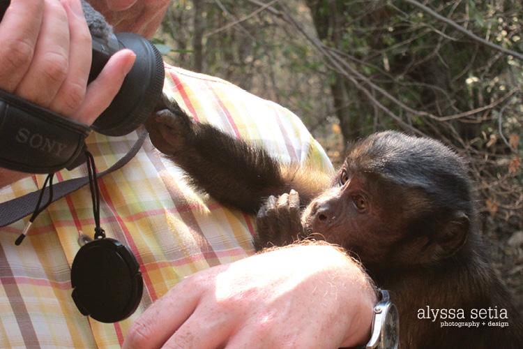 SA elephant, monkey53