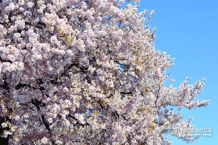 DC spring18