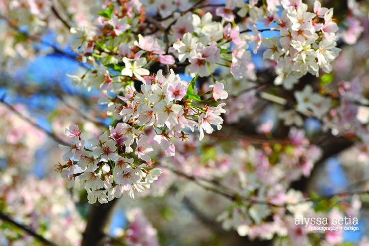 DC spring19